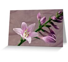 Hosta Blossom And Buds Greeting Card
