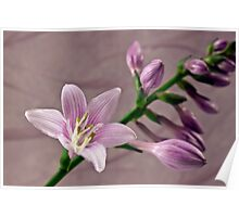 Hosta Blossom And Buds Poster