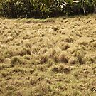 Grassy Textures by -aimslo-