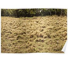 Grassy Textures Poster