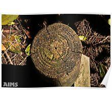 Tree Stump Circles Poster