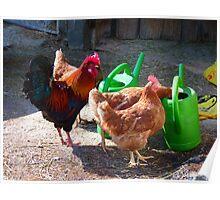 Hens Chicken Hahn Gockel Poultry Pets Poster