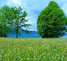 Meadow Flowers Bloom Colorful See Water by HQPhotos