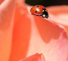 Rosy, Lady, Bug by allenvorozhko