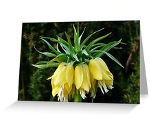 Imperial Crown Flower Plant Yellow Greeting Card