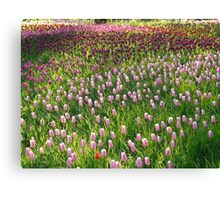 Tulip Field Tulips Pink Light Pink Tender Canvas Print