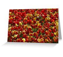 Tulip Field Back Light Light Seem Greeting Card