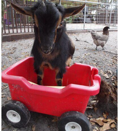 Goat Play- Lafayette Sticker