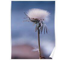 dandelion haze Poster