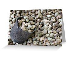 Cashew Nut Cashew Roast Plant Nut Greeting Card