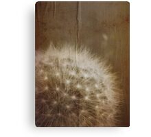 vintage dandelion Canvas Print