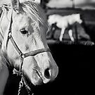 Horse Shadows by Josie Eldred