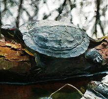 The Red Eared Slider by PictureNZ