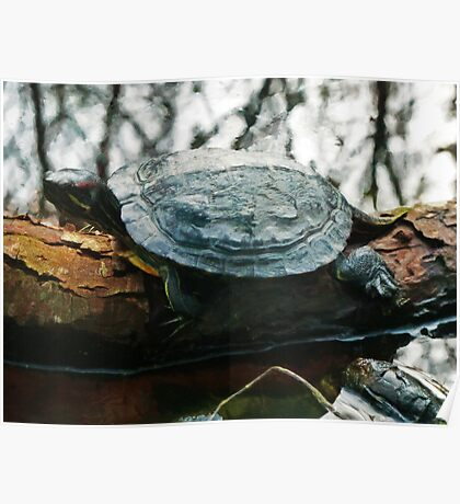 The Red Eared Slider Poster