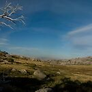 The Rooster Tree Thredbo by Mark Higgins