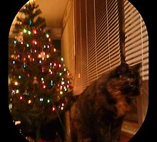 Christmas Kitty Waiting for Santa by merrychris