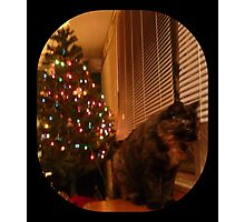 Christmas Kitty Waiting for Santa Photographic Print