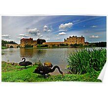 Black Swans at Leeds Castle Poster