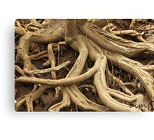 Twisted Tree Roots Canvas Print