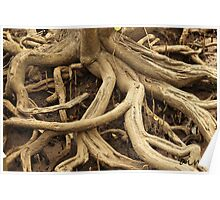 Twisted Tree Roots Poster