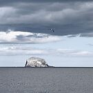 Bass Rock by AmandaJanePhoto