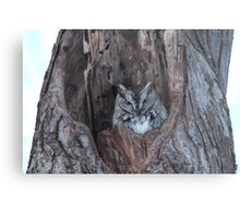Little Screech Owl Grey Phase Metal Print