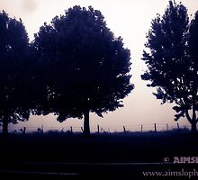 3 Trees by -aimslo-