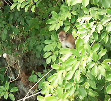 Island Monkey by rosedragon