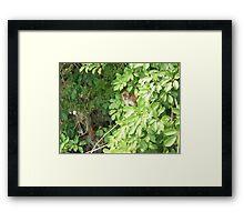 Island Monkey Framed Print