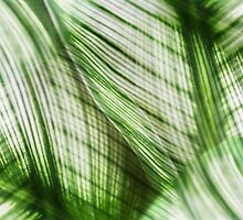 Nature Leaves Abstract in Green by Natalie Kinnear