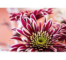 En pleine floraison Photographic Print