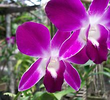 Thai beauty by rosedragon