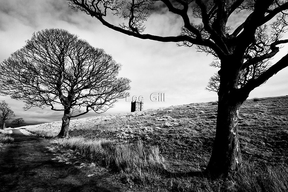 Through The Trees by Lee  Gill