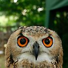 Hello, said the Owl by m4rtys