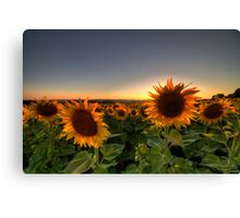 Backlit Canvas Print