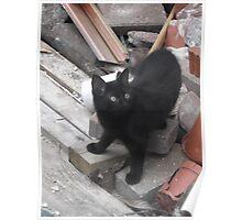 Kitten exploring the backgarden -(210812)- Digital photo Poster