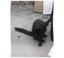 Kitten, found a bug...! -(210812)- Digital photo Poster