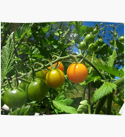Nearly ripe Poster