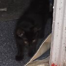 Kitten, about to explore garden -(210812)- Digital photo by paulramnora