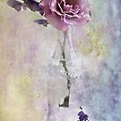 A Dusty Pink Rose by Shelly Harris