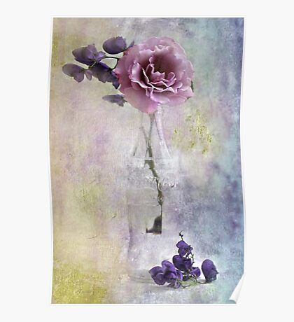A Dusty Pink Rose Poster