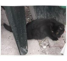 Kitten exploring the backgarden/3-(210812)- Digital photo Poster
