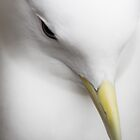Kittiwake Portrait by cjdolfin