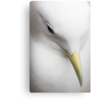 Kittiwake Portrait Canvas Print