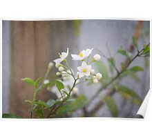 White Flowers Texturized Poster