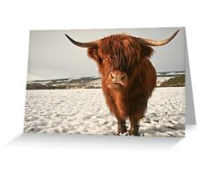 Highland Cow in Snow Greeting Card