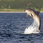 Moray Firth Dolphin by cjdolfin