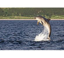 Moray Firth Dolphin Photographic Print
