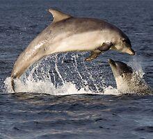 Moray Firth Dolphins by cjdolfin