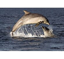 Moray Firth Dolphins Photographic Print